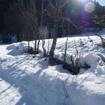 Zäune unter 1,50 m versinken noch im Schnee