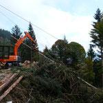 werden hier Holzschlägerungsabeiten durchgeführt