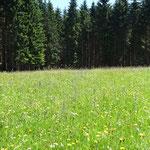 um diese Jahreszeit noch blühende Wiesen
