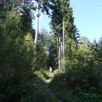 Aufstieg über Steig zur Enzian Hütte und Mauthner Alm