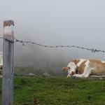Richtung Leppner Knappensee wieder mehr Nebel