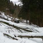 viele umgefallene Bäume im Wald