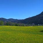 blühende Wiesen und blauer Himmel bei unserer Radtour
