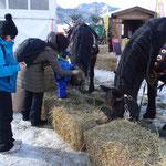 ...und Pferde