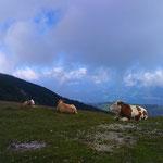 schöner Ausblick für Tier......