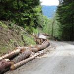 Holzschlägerungsarbeiten kurz vor der Alm