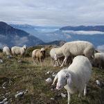 weit hinter dem Sattelnock trafen wir auf die Schafe