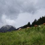 die Kühe sind schon auf der Möselalm