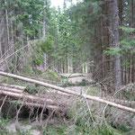 durch die umgefallenen Bäume