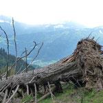 auch große Bäume hielten dem vielen Schnee nicht Stand
