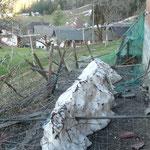 beschädigter Zaun vom Winter