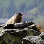 beim Abstieg begegneten wir ein Murmeltier