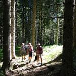 und durch den Wald