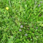 grüne, blühende Wiesen im Tal