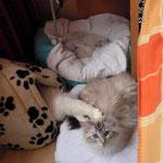 Familienschlaf. Gleich neben meinem Bett