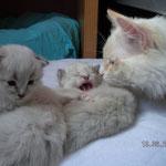 Papa sieht nach seinen Kitten