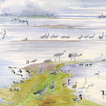 Les oiseaux du Lac du Der. Pour la LPOCA, aquarelle