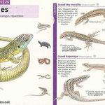 "miniguide La Salamandre  ""Reptiles"""