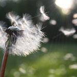 Pollen, Sporen, Staubmilbenallergene und andere Stoffe
