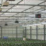 Gartenbau - Hochdruck - Austrocknung / Prozessoptimierung