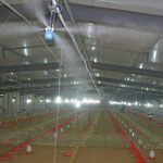 Tierhaltung - Geflügelfarmen