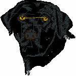 Labrador Kopf, 96x98 mm, 13768 Stiche