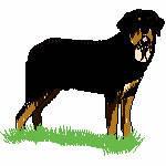 Rottweiler im Gras, 99x90 mm, 12581 Stiche