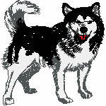 Husky, 96x97 mm, 11960 Stiche