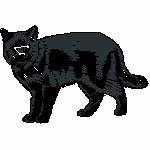 schwarze Katze laufend, 99x65 mm, 7559 Stiche