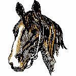 Pferdekopf dreifarbig, 85x108 mm, 4851 Stiche, nicht ausgefüllt, nur auf hellen Farben möglich
