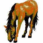 Pferd fressend, 79x96 mm, 10637 Stiche