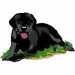 Labrador im Gras, 96x64 mm, 13111 Stiche