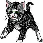 Katze laufend, 98x97 mm, 12218 Stiche