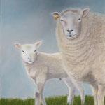 schapen pastel 30x40