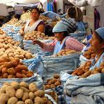 Verkauf der verschiedenen Kartoffelsorten