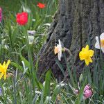 Fantasie & Wirklichkeit Fotografien und Gedichte Kathrin Steiger Frühling Frühlingsblumen bunte Blumen märchenhaft verträumt schön romantisch