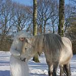 Fantasie & Wirklichkeit Fotografien und Gedichte Kathrin Steiger Winter Schnee Schneefee Schneeelfe Schnee-Elfe Winterfee Winterelfe Fairy Snow Fairy Fairies Pferd Pony