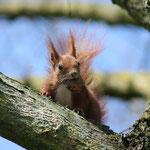 Fantasie & Wirklichkeit Fotografien und Gedichte Kathrin Steiger Eichhörnchen Eichkätzchen Eichkater Frühling märchenhaft verträumt schön romantisch