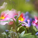 Fantasie & Wirklichkeit Fotografien und Gedichte Kathrin Steiger Frühling märchenhaft verträumt schön romantisch