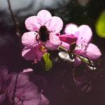 Fantasie & Wirklichkeit Fotografien und Gedichte Kathrin Steiger Blume Rhododendron Hummel Frühling märchenhaft verträumt schön romantisch