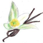 Vaniglia di Tahiti タヒチヴァニラ