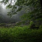 Auf einsamen Pfaden wandern wir durch den Risnjak Nationalpark