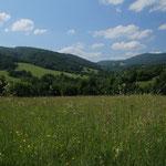 Der Poloniny National Park, eine einzigartiger Mix aus Blumenwiesen und wilden Wäldern!