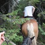 Romania - Experience Wilderness Eastern Carpathians - Erkundung per Pferd