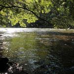 eine wunderschöne, naturbelassene Flusslandschaft