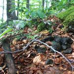 Croatia - Experience Wilderness Risnjak NP - Bärenkot