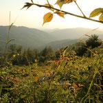 ... genießen wir fantastische Ausblicke über die Waldkarpaten.