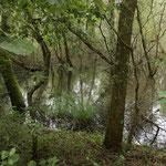 Erkunden das Rhein-Delta am Bodensee...