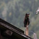 Slovenia - Naturtour - Hauskatze