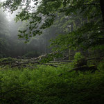 Croatia - Experience Wilderness Risnjak National Park